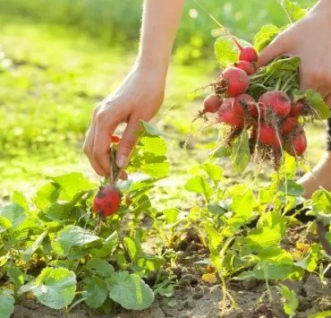 ingredient, 10 Delicious Ingredients You Should Grow From Home
