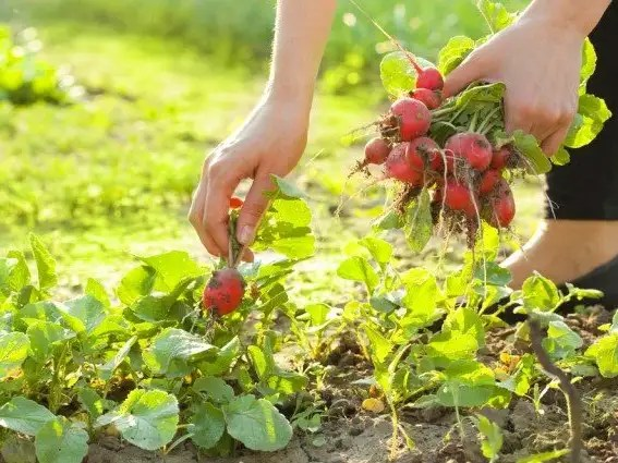 10 Delicious Ingredients You Should Grow From Home