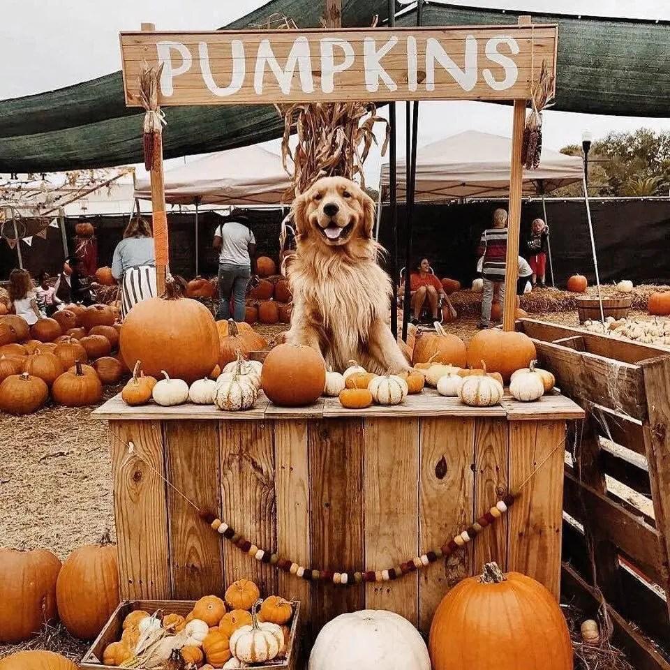10 Cute Fall & Halloween Items for You Furbabies