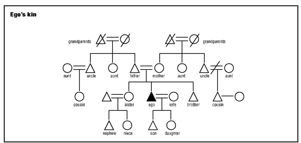 Diagram Drawing A Kinship Diagram Full Version Hd Quality Kinship Diagram Hdatawiringsite Varosrl It