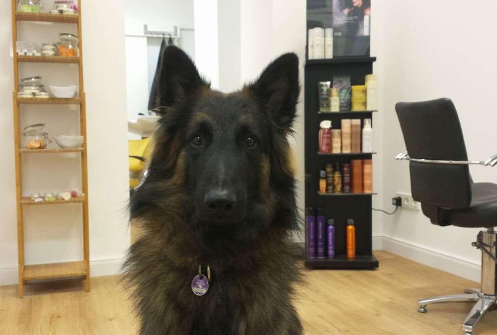 Das Regenbogenschaf - Hund Egen im Salon Das Regenbogenschaf Färberin Maike Schnichels - Das Regenbogenschaf im Interview