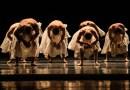 #Dança: Sessões extras do Grupo Corpo, dias 15 e 16 de agosto, no Teatro Alfa