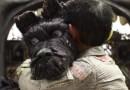 #Cinema: 'Ilha dos Cachorros' ganha trailer