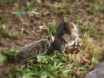 Überall zu sehen: So gar nicht scheue Eichhörnchen