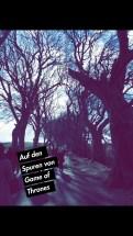 """Die """"Dark Hedges"""" - die Birkenallee in Nordirland dient GoT als Weg aus Königsmund in St.2, Ep. 1"""