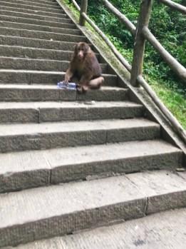 Affen auf Emeishan