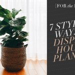 [For the Home] 7 Stylish Ways to Display Houseplants!