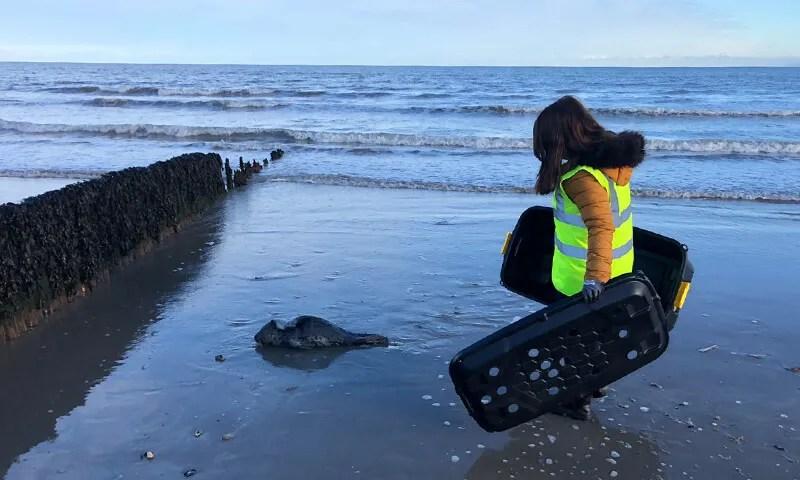 seal-rescue-volunteer