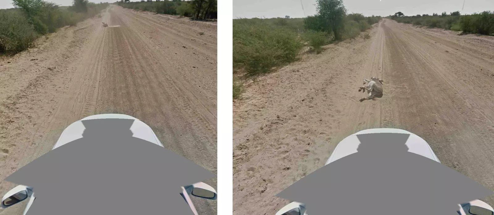 burro atropellado google street view 2