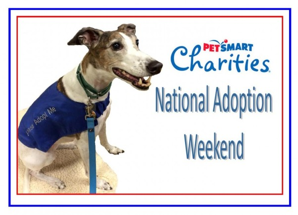 PetSmart-Adoption-Weekend-with-Mickey-e1423504131653