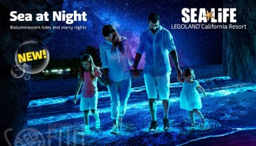 sea-at-night-we-graphics1400x800-post