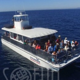 Oceanside-Adventures-Whale-Watching-400x400