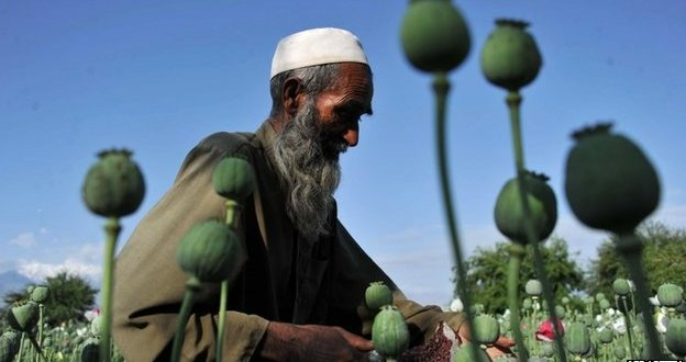 US spends $7bn but fails to stop Afghan opium poppy growth