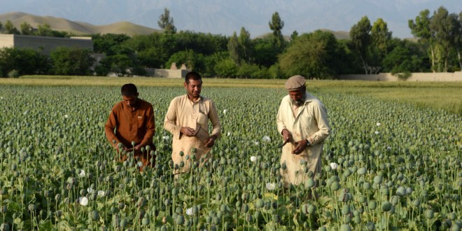 Afghanistan: Still the King of Opium
