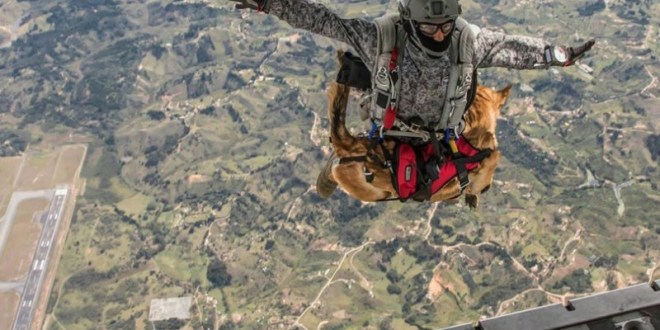 Colombia's special forces dogs are also skydivers | CCTV America