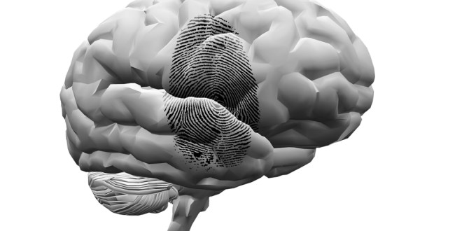 New unique brain 'fingerprint' method can identify a person with nearly 100% accuracy | KurzweilAI