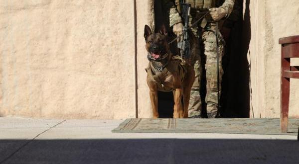 SOCom seeks performance-enhancing products for its commando dogs | Tampa Bay Times