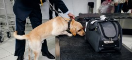 America Is Running Out of Bomb-Sniffing Dogs | The New York Times