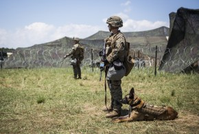 Special forces dog wins 'animal Victoria Cross' for Taliban raid heroics | Telegraph