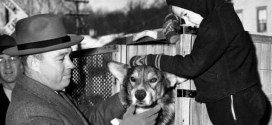 Heroic Army working dog awarded posthumous medal | Army Times