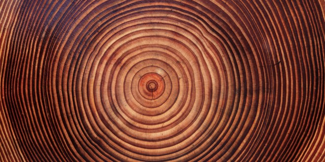 Stronger Than Steel, Able to Stop a Speeding Bullet—It's Super Wood! | Scientific American