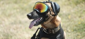This Is Carolina: Elite military dogs come to aid of 'wounded warriors' | WMBF News