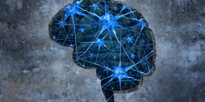 Researchers link defects in a nuclear receptor in the brain to autism spectrum disorders   Science Daily
