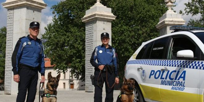 Madrid police dogs get 'Mozart effect' music therapy | BBC News