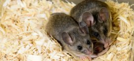 BPA can induce multigenerational effects on ability to communicate, mouse study shows | Science Daily