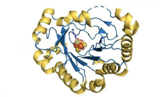 Compound made inside human body stops viruses from replicating | Science Daily