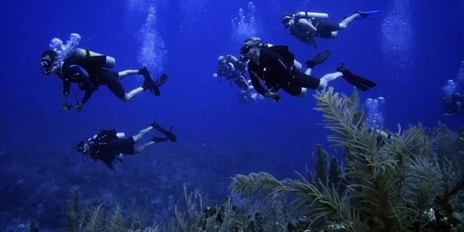 These Veterans Are Fighting A New War, This Time Against Attacks on South Florida's Coral Reefs | WLRN
