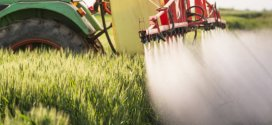 Leading researchers call for a ban on widely used insecticides | Science Daily