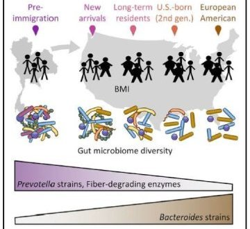 Immigration to the United States changes a person's microbiome | Science Daily