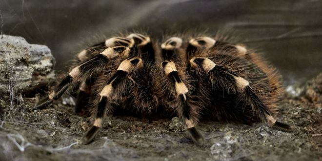 Man Caught Attempting to Smuggle Dozens of Tarantulas in Luggage | Travel and Leisure