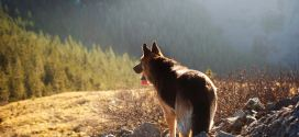 Dog ownership associated with longer life, especially among heart attack and stroke survivors | Science Daily