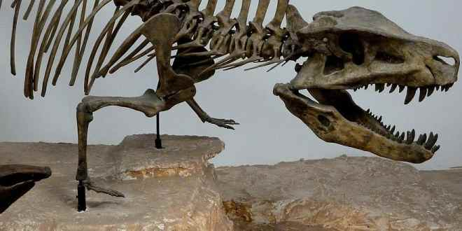 Malignant cancer diagnosed in a dinosaur for the first time | Science Daily