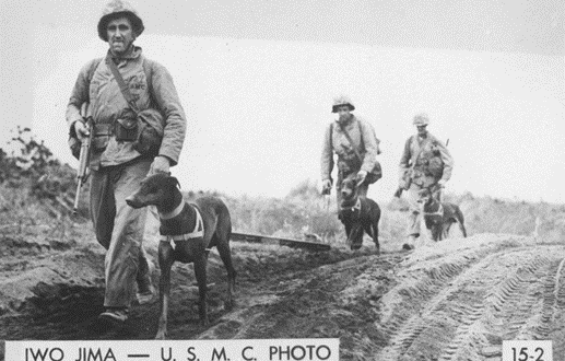Omaha vet, 103, trained Marine war dogs at Iwo Jima | Omaha World Herold