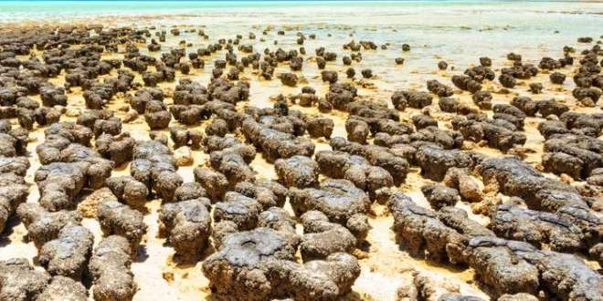 Stromatolites: The Earth's oldest living lifeforms | BBC Travel