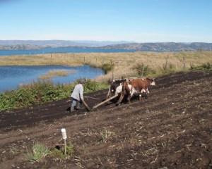 El Lago de Tota en riesgo por culpa de fertilizantes