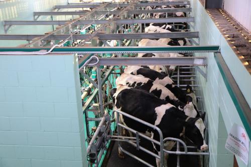 trasporto-attrezzature-mungitura-prodotti-agricoli-mucche