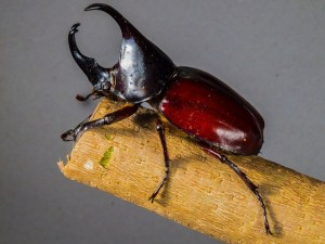 tropical-beetles-195905_640