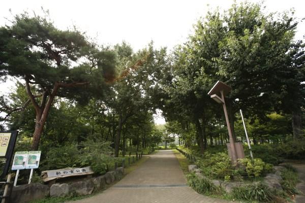 kashiwanomiya_park_01