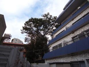 【募集終了】渋谷、庭付きヴィンテージマンションをオフィスに