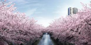 桜の季節まで…もう少し!