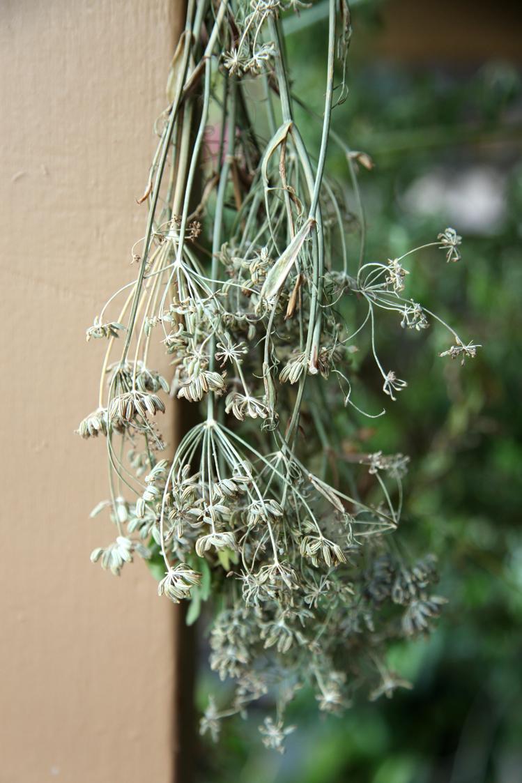 Kako da sačuvate leto u kuhinji (čuvanje začina i začinskog bilja)