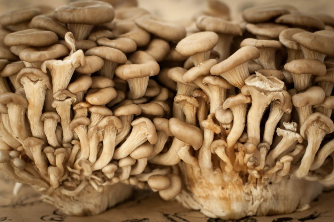 Asian mushrooms 2