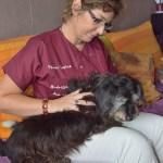 Magnétisme sur animaux en alsace - Soins énergétiques Alsace