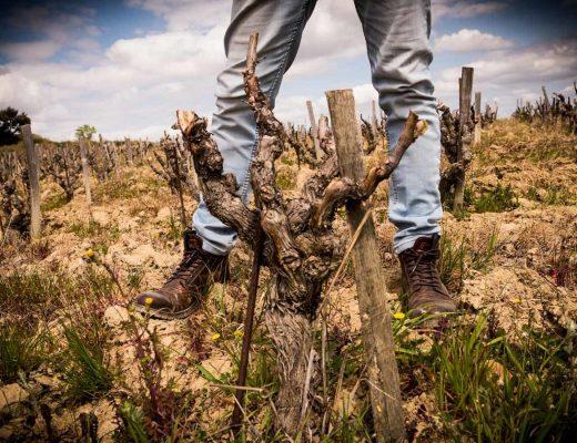 Langlois wine consulting, Fabrice Langlois, Sophie Le DRoumaguet pour Sokebana