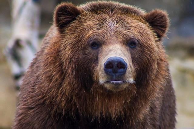 Dieu est comme un ours