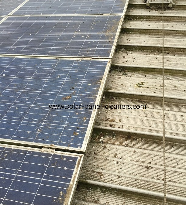 Bird Proofing On Commercial Rooftop Solar Panels In Surrey